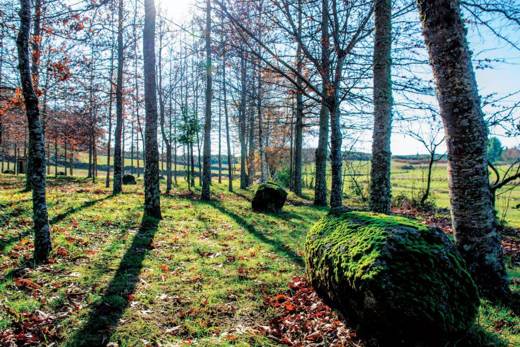 Paisagem verdejante com árvores e pedras com musgo, perto da Casa de Vilar.
