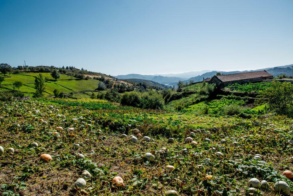 Horta com abóboras e couves. Ao fundo há montanhas, lameiros verdes e uma casa.