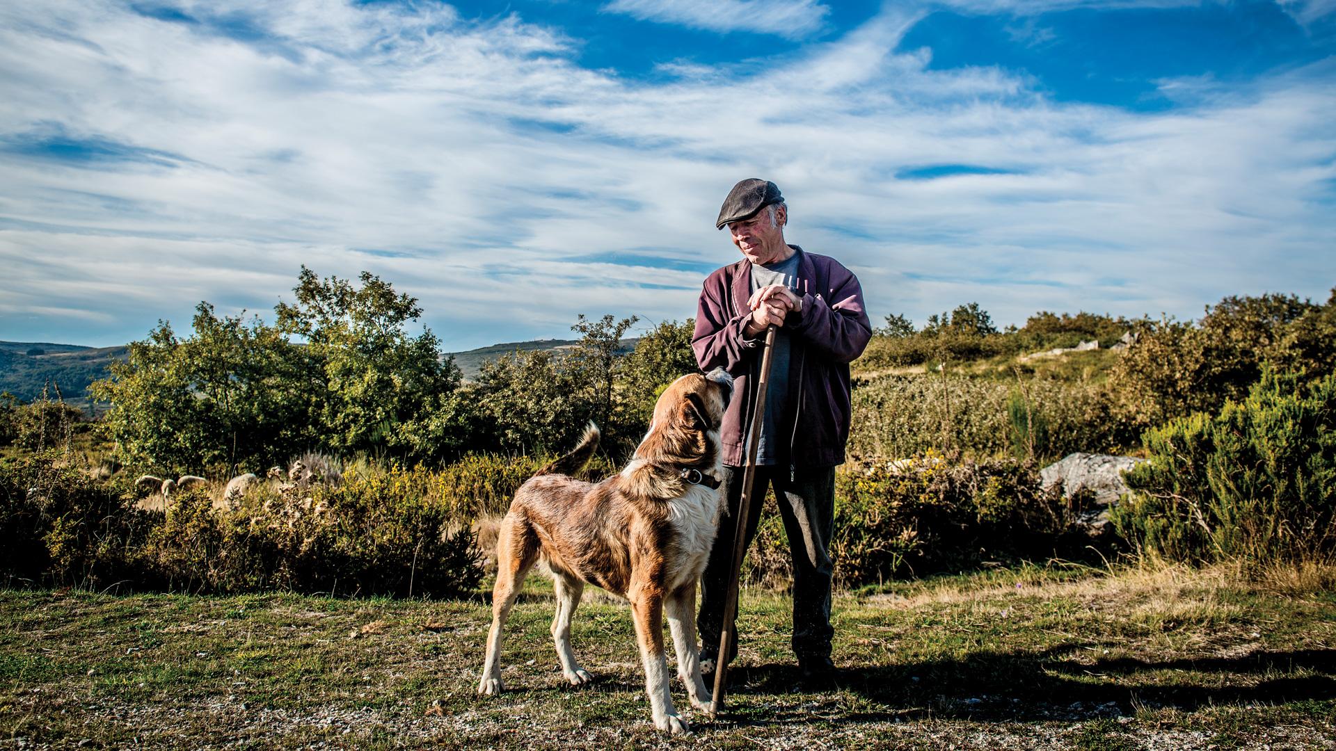 Paisagem de arbustos baixos, com céu azul e algumas nuvens, na Serra do Larouco. Ao centro está um pastor com o seu cão de grande porte. O cão e o pastor olham-se enternecidos.
